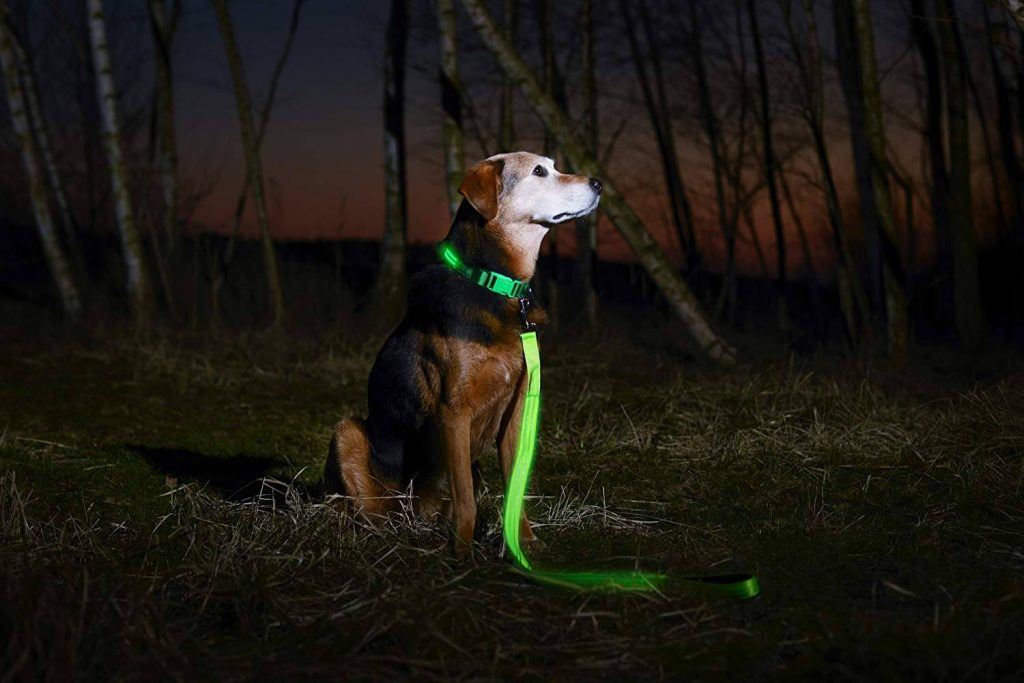 Illumiseen LED Dog Collar Dog in Dark