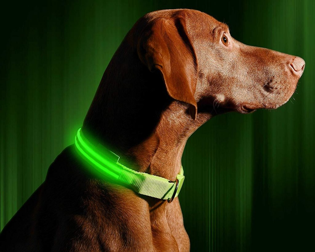 Illumiseen LED Dog Collar Green on Dog