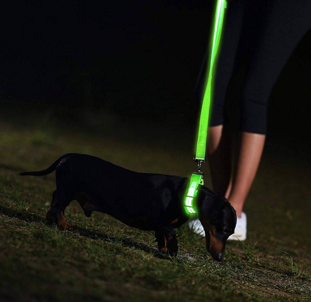 Illumiseen LED Dog Collar Night