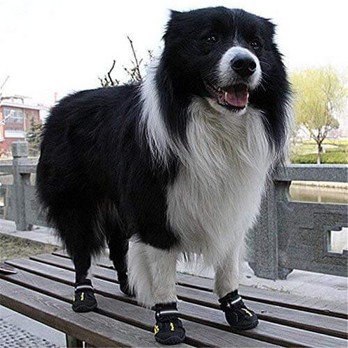 QUMY Dog Boots on Dog