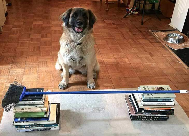 Doggy Indoor Obstacle Course DIY