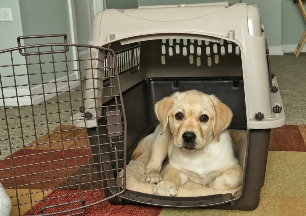 Puppy Portable Crate