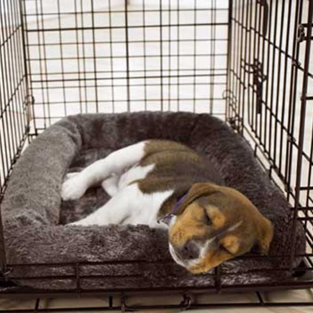 Puppy Sleeping in Crate