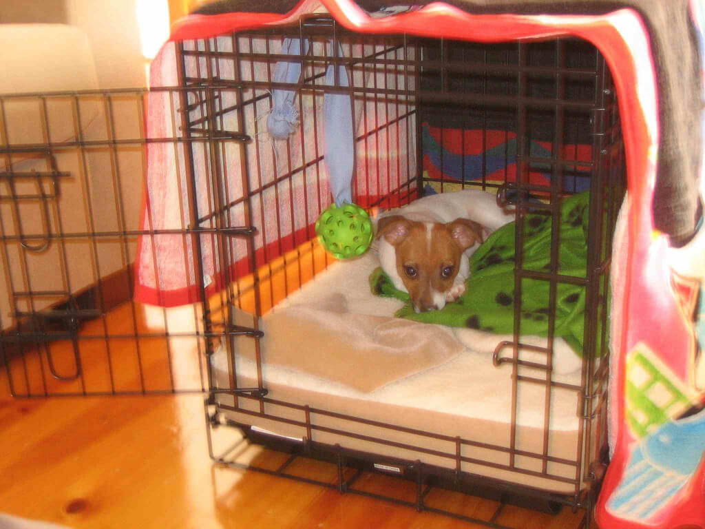 Small Dog in Cozy Crate