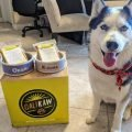 best raw dog foods review
