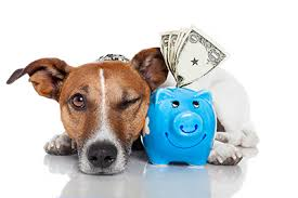 small dog with blue piggy bank