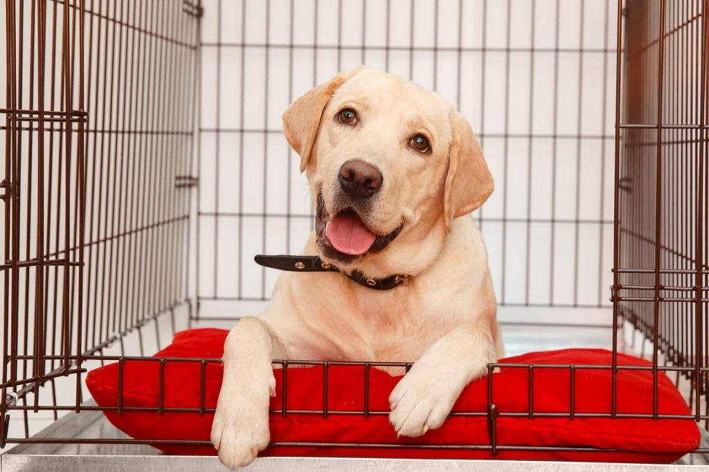 Crate Training Lab on Red Mat