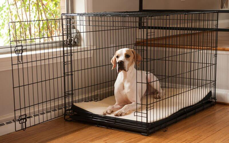 Dog In Large Crate