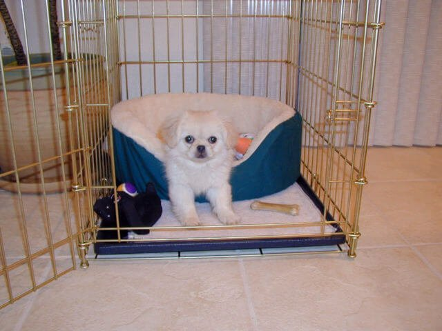 Small Dog with Bed in Crate