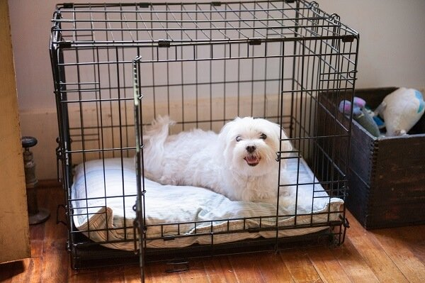 White puppy comfy crate