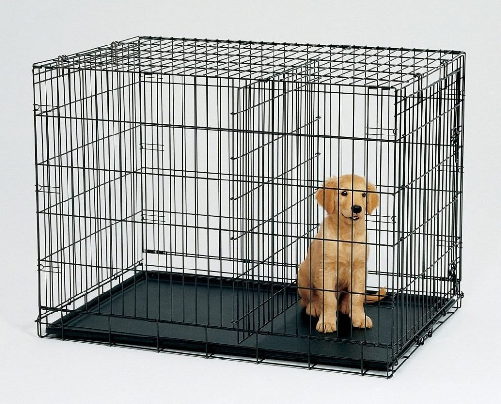 Golden Puppy in a Crate with a divider