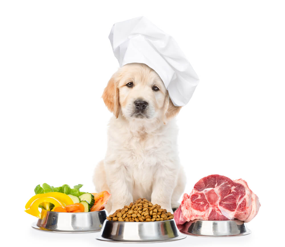 Lab Puppy Chef Raw Food