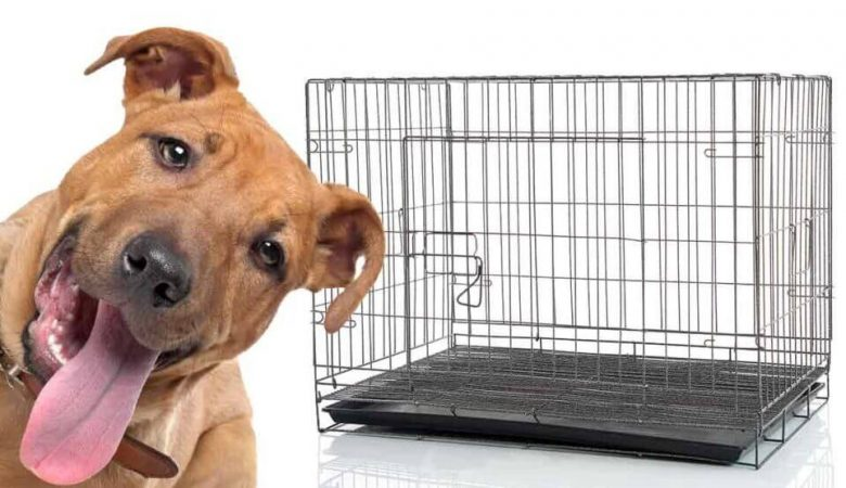 Pitbull and dog crate