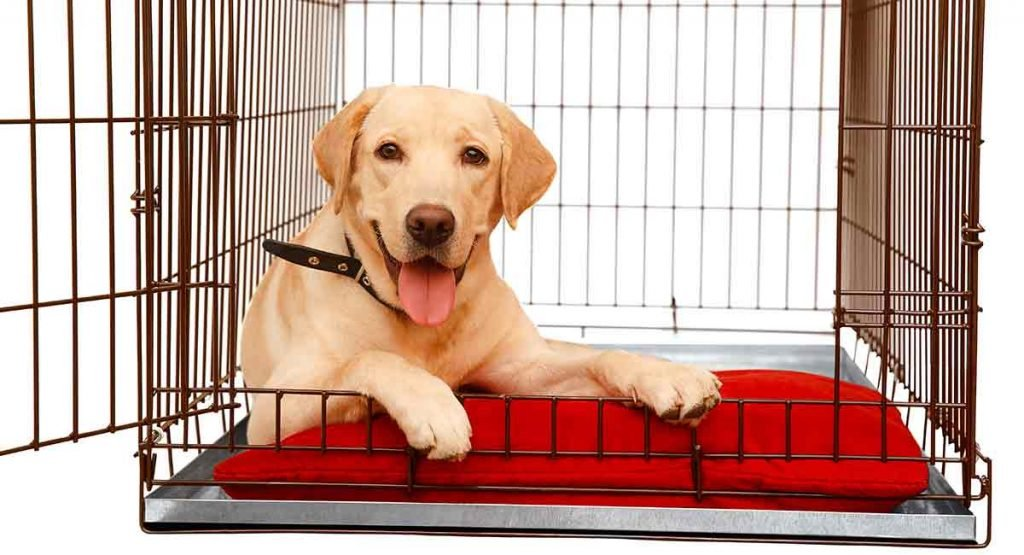 best dog crate for labs