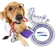 Dog glasses DNA research