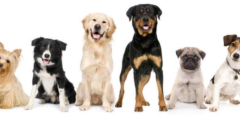 Line of dogs