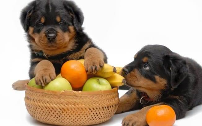 Rottie puppies with fruit bowl