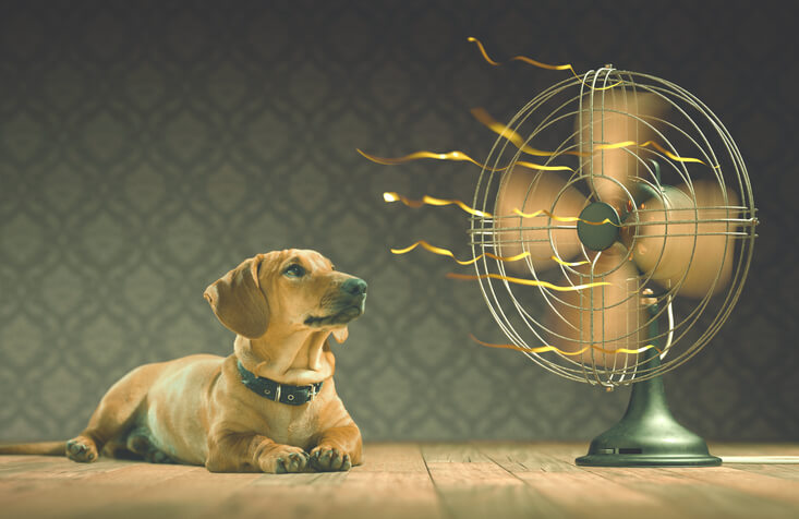 Dog cooling next to fan